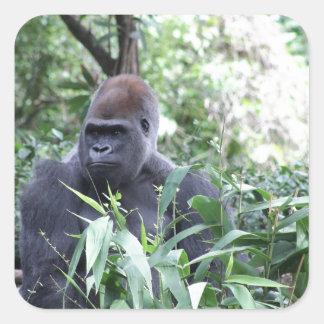 gorila del silverback pegatinas cuadradas