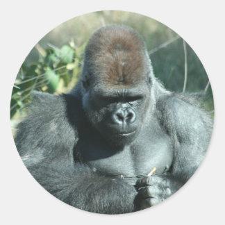 Gorila del Silverback Pegatina Redonda