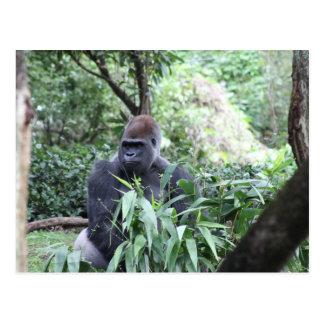 gorila del silverback tarjeta postal