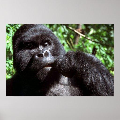 Gorila del varón del Silverback Poster