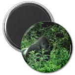 Gorila en animal verde de la fauna del tinte de la imanes para frigoríficos