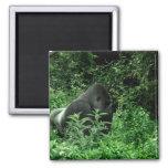 Gorila en animal verde de la fauna del tinte de la imán de nevera