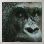 Gorila en el poster de la niebla