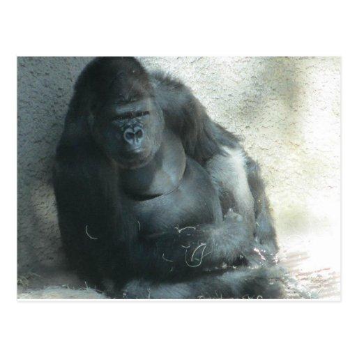 Gorila en el sol postal