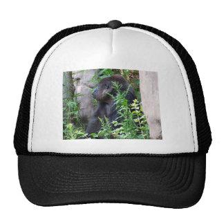 Gorila en la niebla gorros
