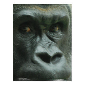 Gorila en las postales de la niebla