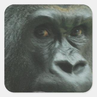 Gorila en los pegatinas de la niebla pegatina cuadrada