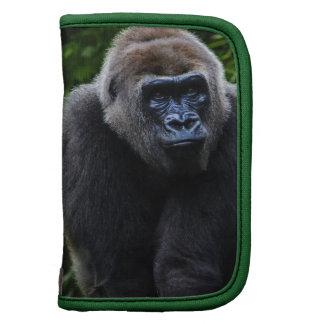 Gorila Organizadores