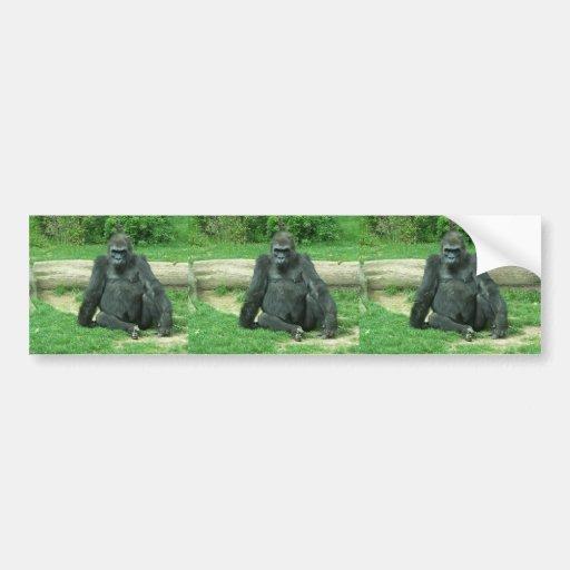 Gorila gruñón de la tierra baja etiqueta de parachoque