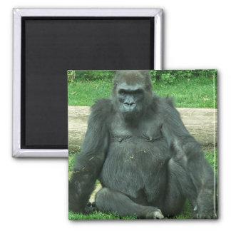 Gorila gruñón de la tierra baja imán de frigorifico
