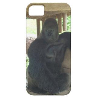 Gorila gruñón iPhone 5 protectores