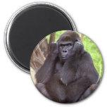 Gorila gruñón iman de frigorífico