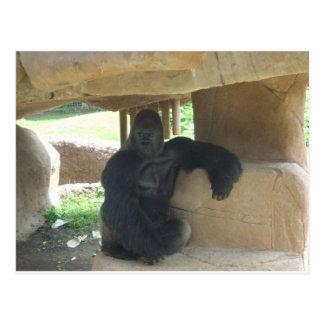 Gorila gruñón tarjetas postales