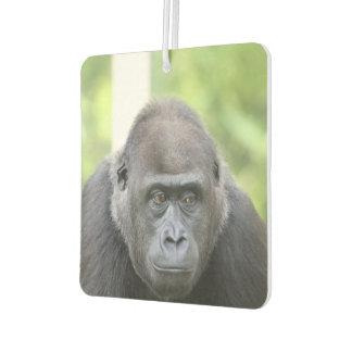 gorila impresionante