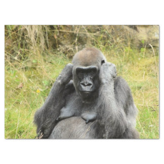 gorila impresionante papel de seda grande