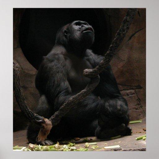 Gorila Impresiones