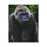 Gorila Lona Envuelta Para Galerias