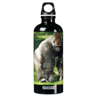 Gorila masculino de la tierra baja del Silverback