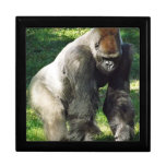 Gorila masculino de la tierra baja del Silverback  Cajas De Joyas
