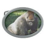 Gorila masculino de la tierra baja del Silverback  Hebillas De Cinturon