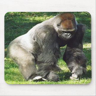 Gorila masculino de la tierra baja del Silverback  Tapetes De Raton