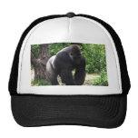 Gorila masculino down.jpg principal que camina del gorro