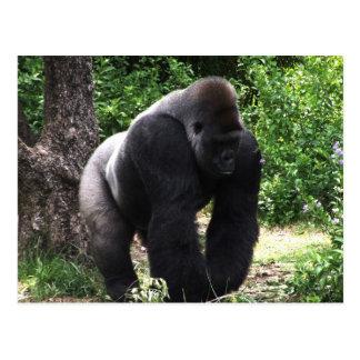Gorila masculino down.jpg principal que camina del postal