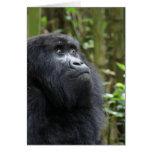 Gorila mis sueños - hembra felicitaciones