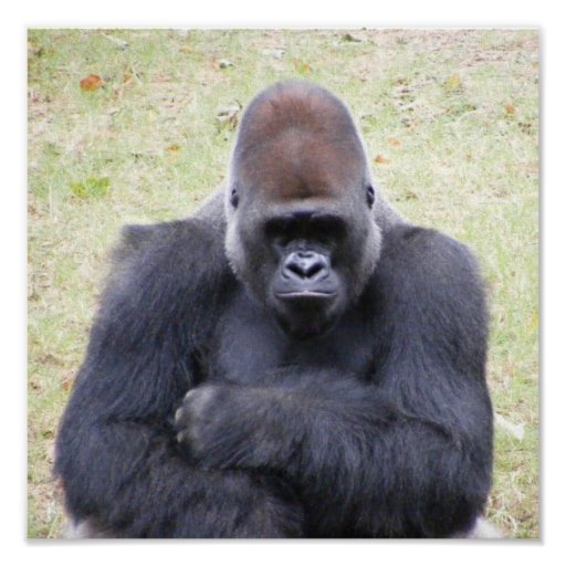 Gorila Poster