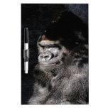 Gorila pensativo tablero blanco