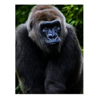 Gorila Postales