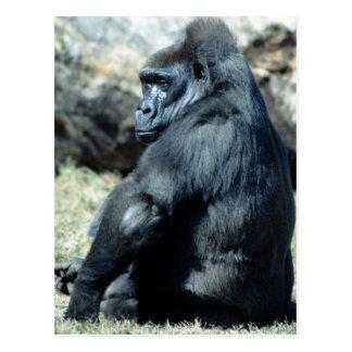Gorila que se sienta postal