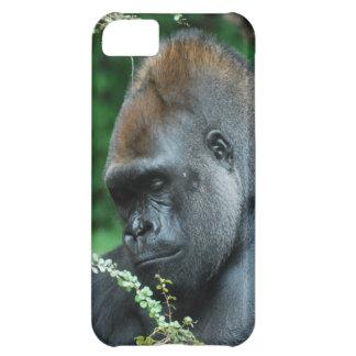 Gorila severo