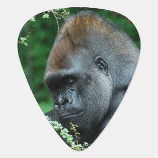 Gorila severo púa de guitarra
