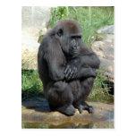 Gorila Sitting Postcard