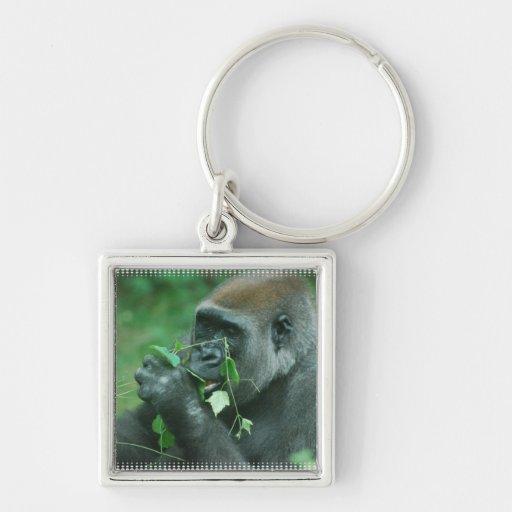 Gorila Snacking Llaveros Personalizados