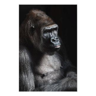 Gorila solo fotos