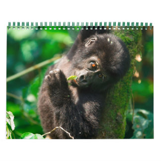 Gorilas de montaña de Uganda Calendario