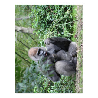 gorilas del silverback postal