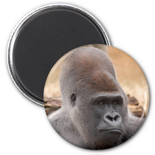 Gorilla_012 Imán Redondo 5 Cm