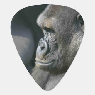 gorilla-11.jpg guitar pick