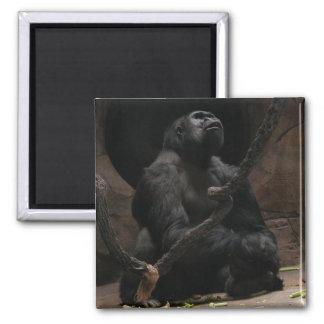 Gorilla 2 Inch Square Magnet