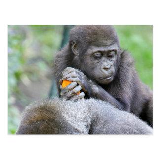 Gorilla and Baby Postcard