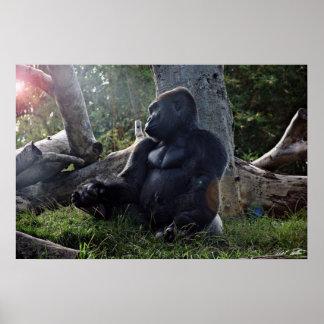 Gorilla and the Sun Print
