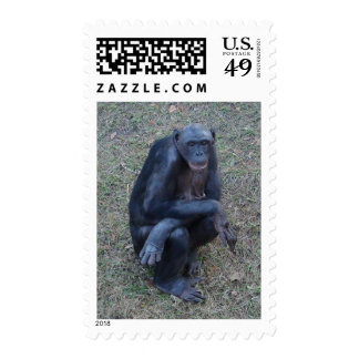 Gorilla Ape Monkey Postage Stamp Photo