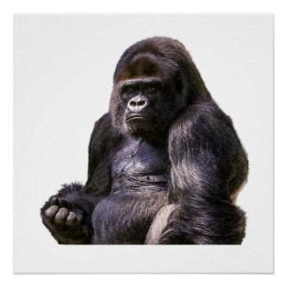 Gorilla Ape Monkey Poster