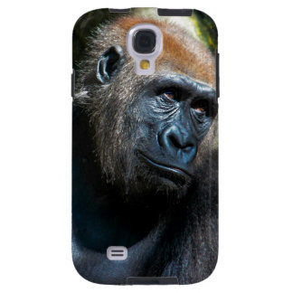 Gorilla Ape Primate Wildlife Animal Photo