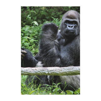 Gorilla Ape Primate Wildlife Animal Photo Canvas Print
