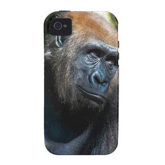 Gorilla Ape Primate Wildlife Animal Photo Vibe iPhone 4 Cover