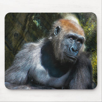 Gorilla Ape Primate Wildlife Animal Photo Mouse Pads